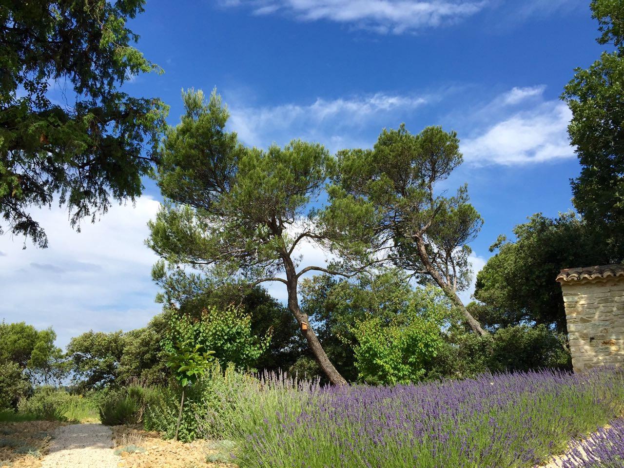 The garden project, dry garden