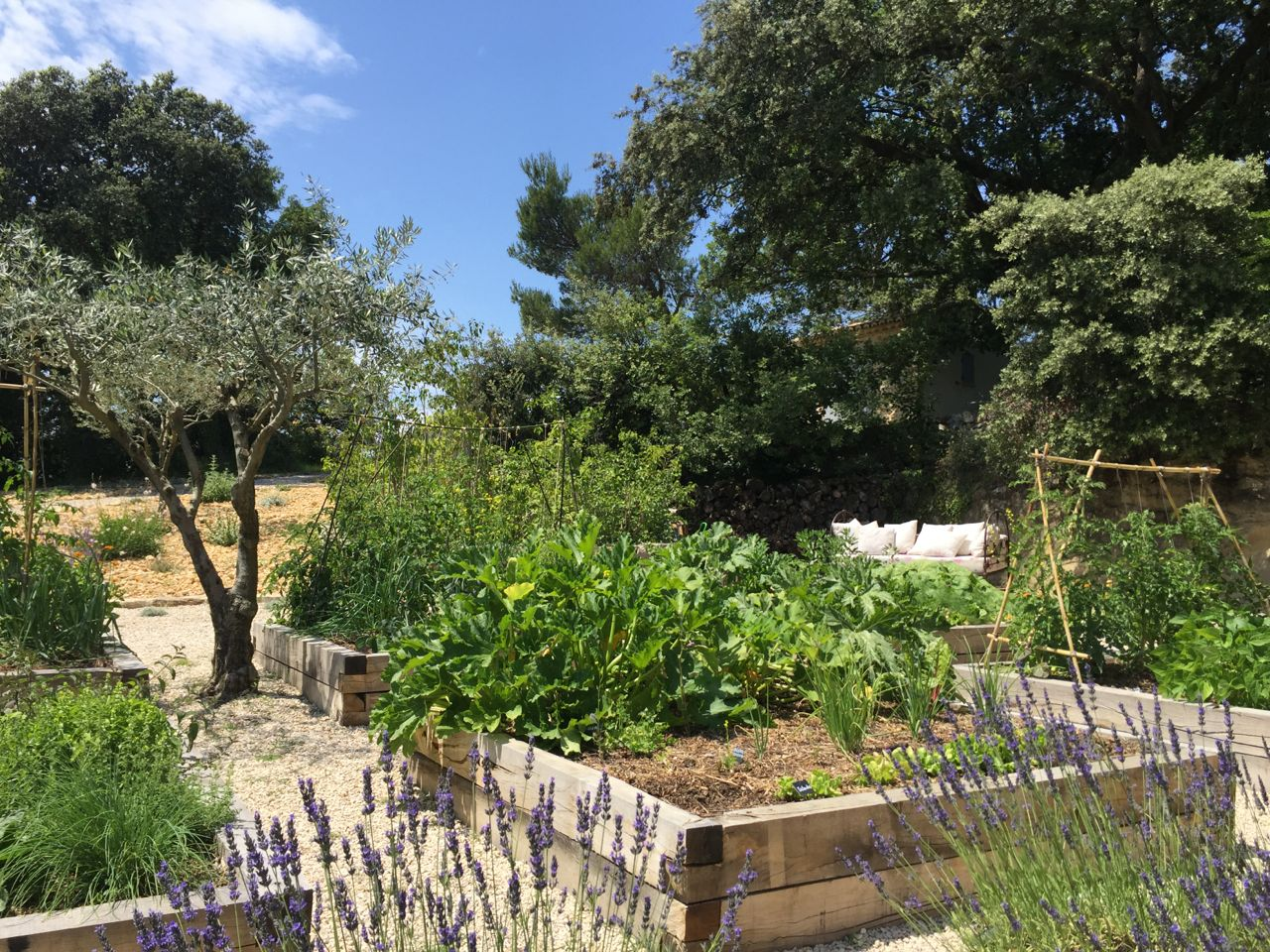 June in the kitchen garden