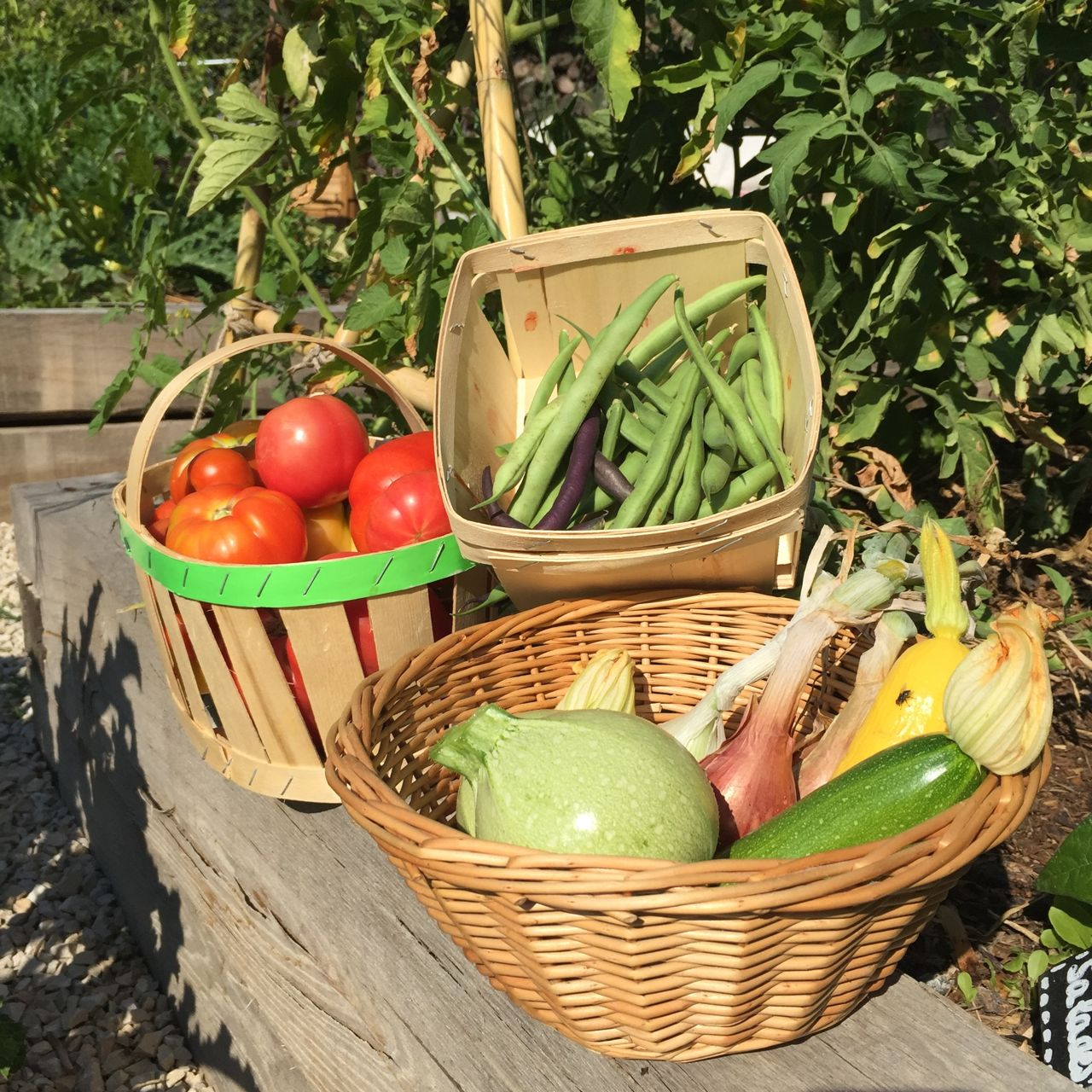 Summer and the kitchen garden