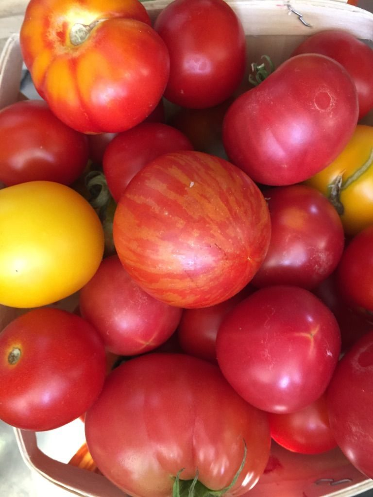 tomatoes from kitchen garden