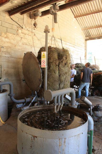 Lavender crop, essential oil production, Sault