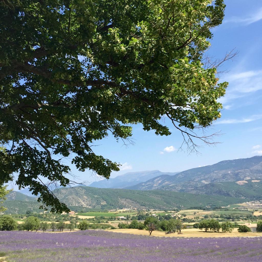 Lavender, St Jalle, drome Provençale