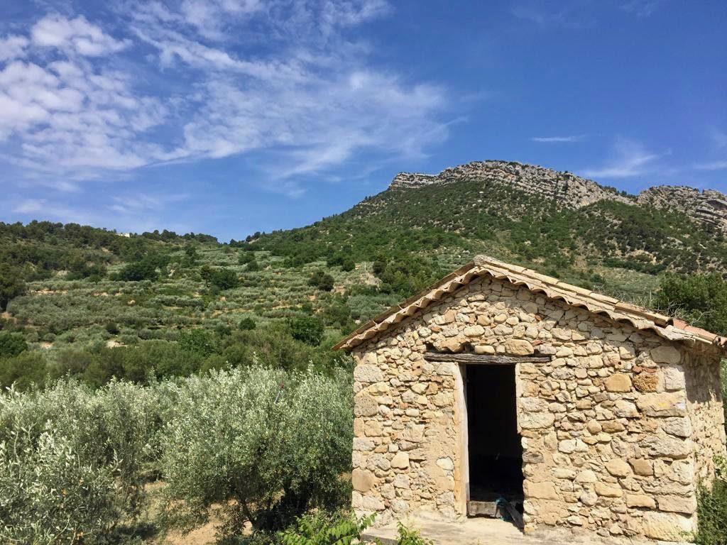 olive trees, Provence, stone shed, St Jalle, Drome Provençale