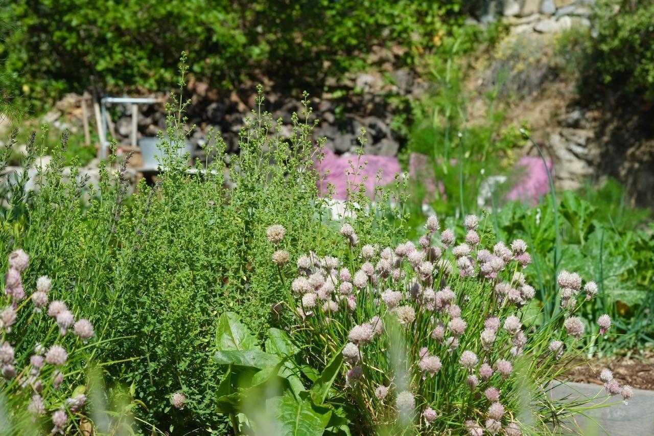 Soil to table, potager @ la Baye des Anges