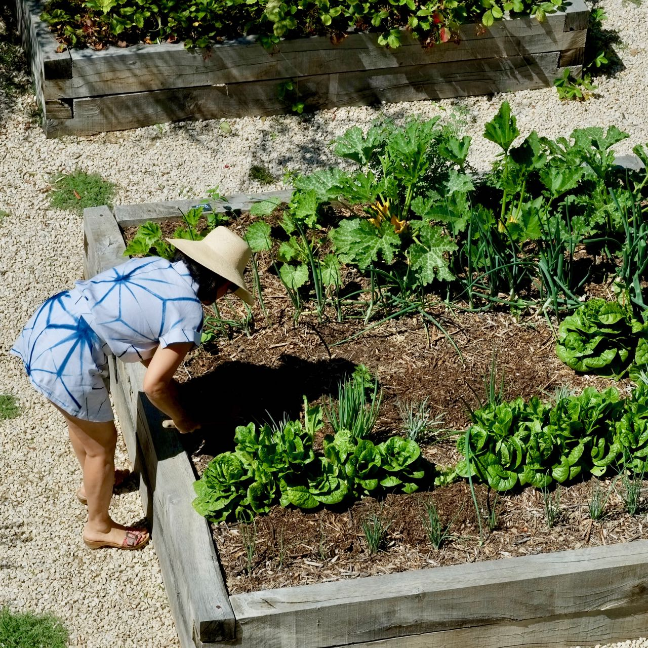 Soil to table, potager @ la Baye des Anges