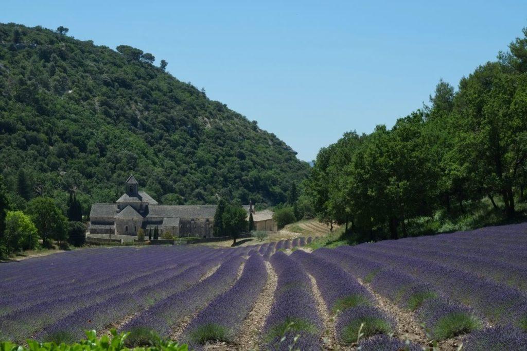 abbaye de senanque, champs de Lavandin lavande