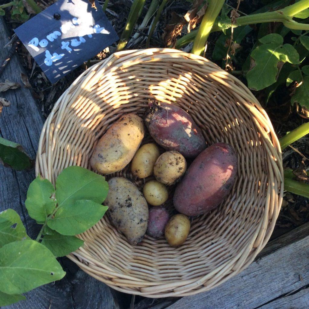 Potager, kitchen garden at La Baye des Anges