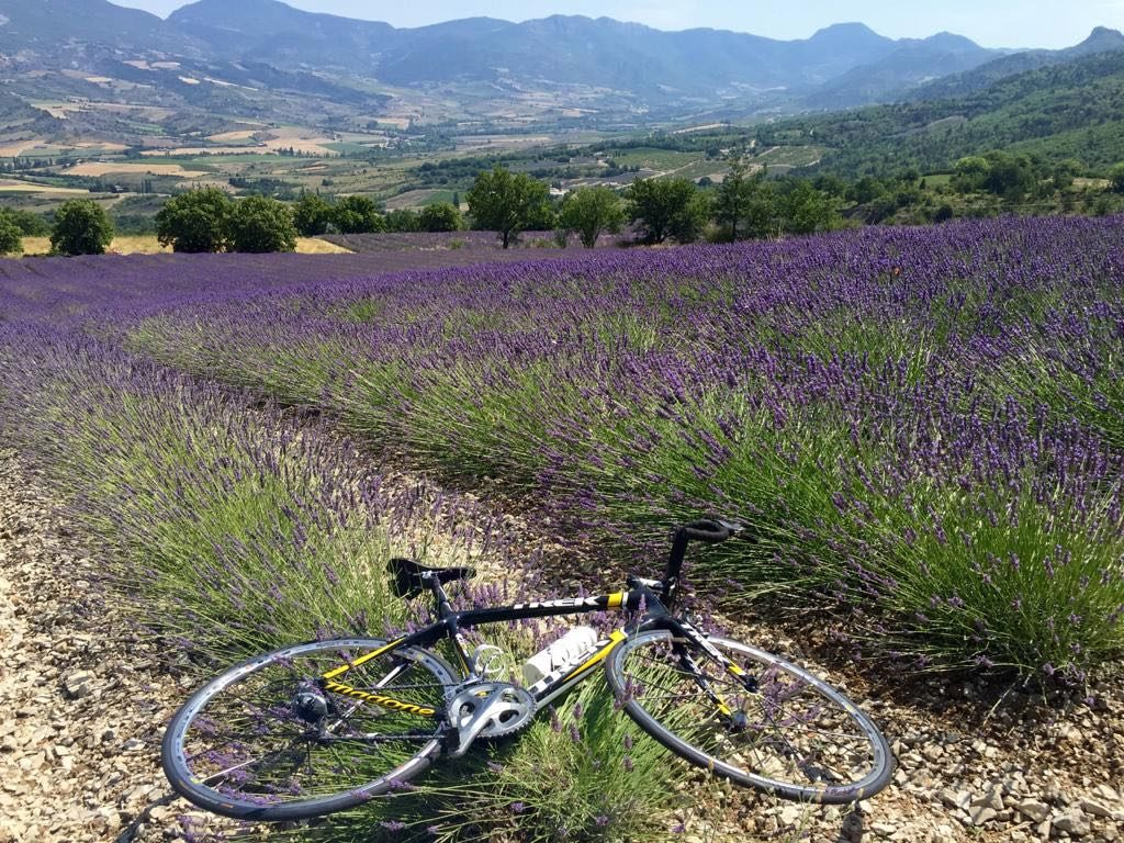Cycling by lavenders in Provence, St Jalle, Drome Provençale