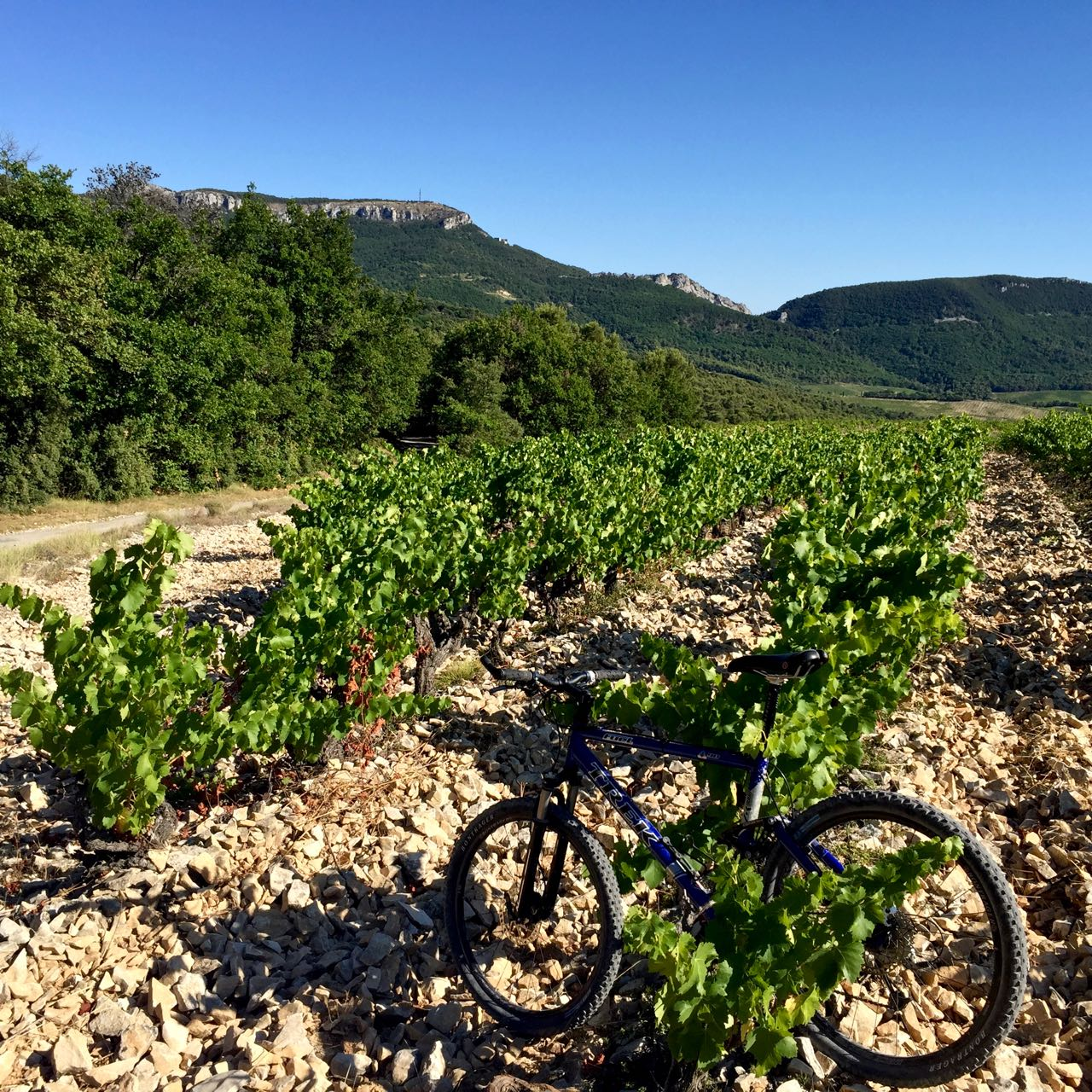 Cycling through the dentelles de Montmirail