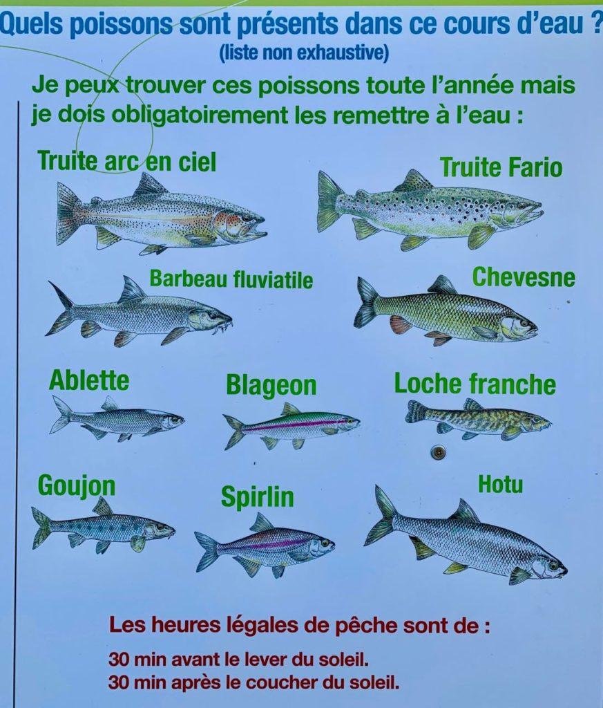 No Kill fishing in Vaison-la-Romaine