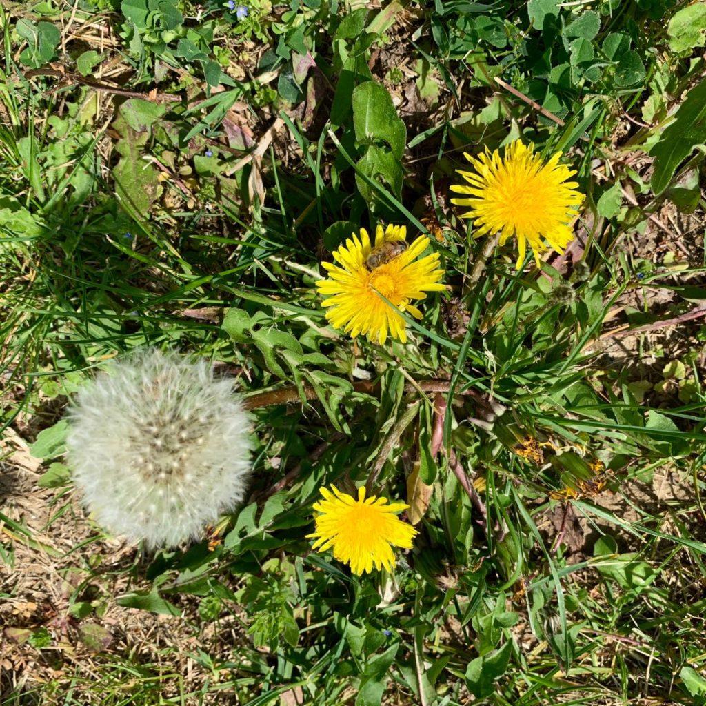 Spring flowers at la Baye des Anges