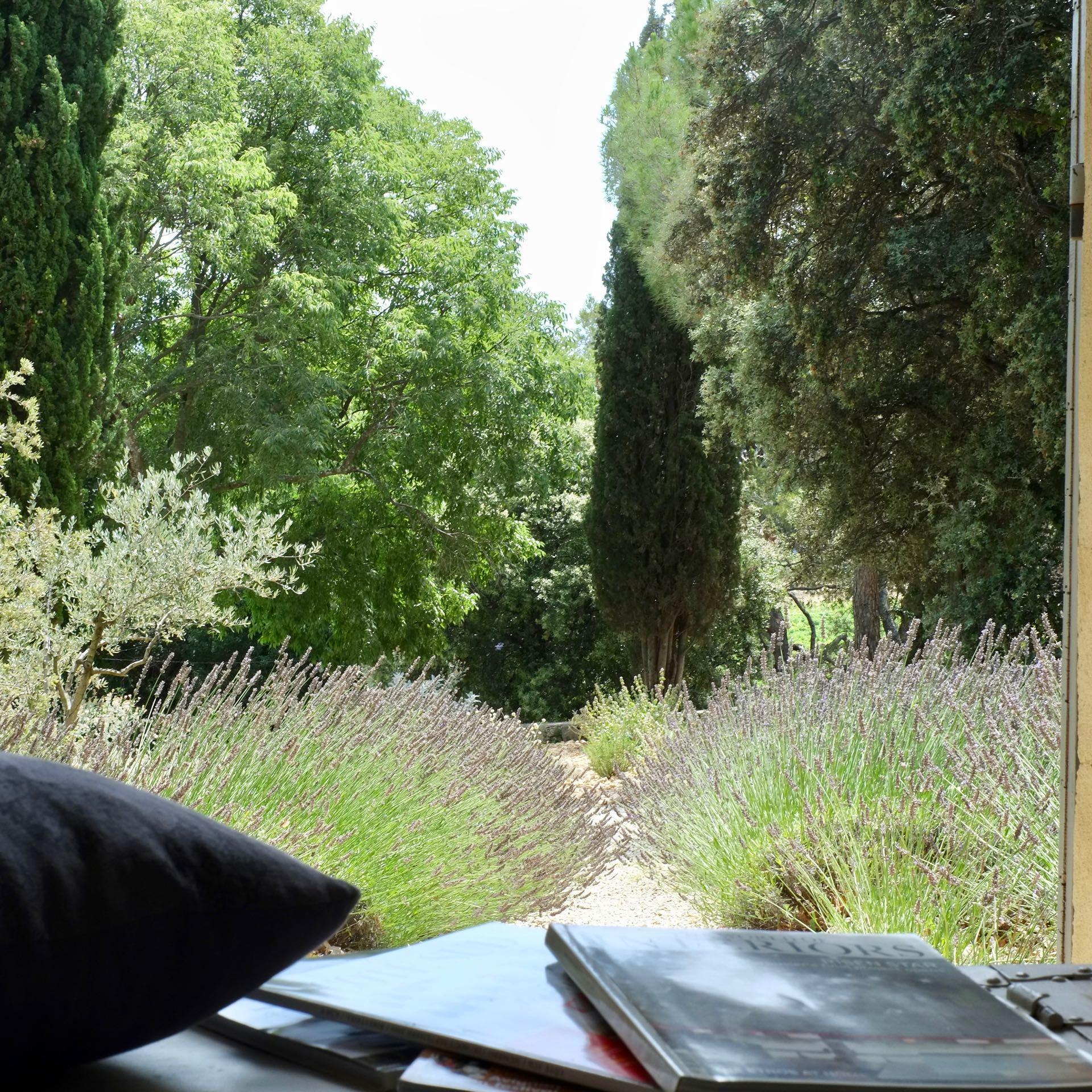 Lavender in the backyard
